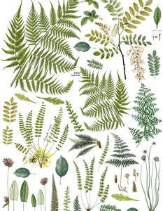 "IOD Decor Transfer ""Fronds Botanical"""