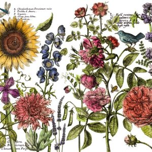 "IOD Decor Transfer ""Botanists´s Journal"""