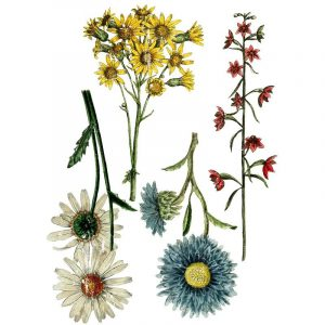 "IOD Decor Transfer ""Wild Flower Botanicals"""