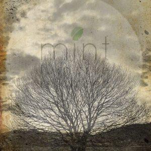 "Mint by Michelle Decoupage Papier ""Sepia Tree"""