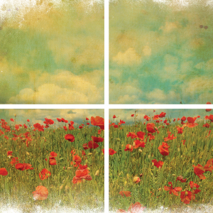 Belles & Whistles Transfer Field of Flowers 61 x 81 cm