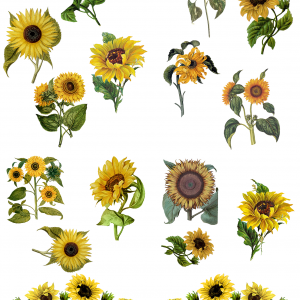 Belles & Whistles Transfer Sunflowers 62 x 81 cm